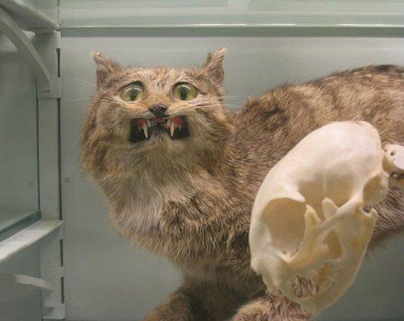 这家动物标本博物馆把我看哭了
