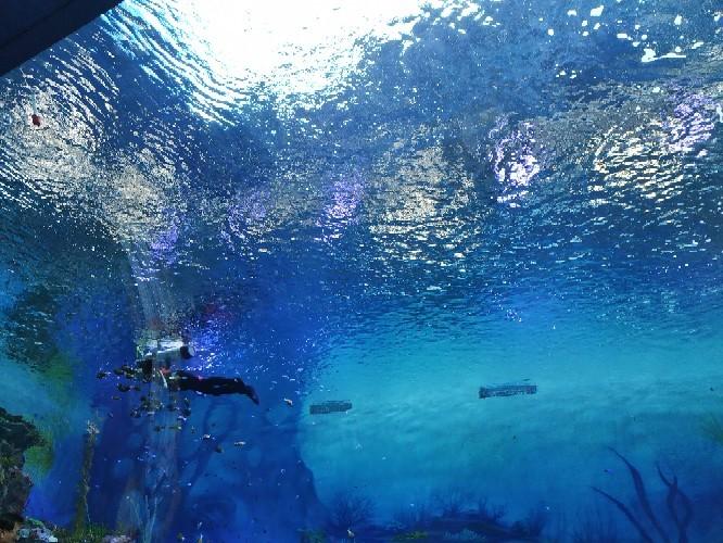 清理鱼缸的鱼种类_海昌海洋公园,边玩边科普-小花生