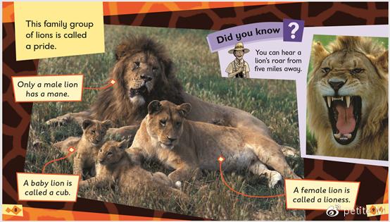 Level 5 non-fiction world safari 内页