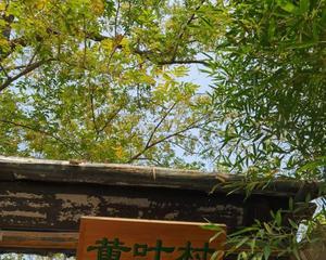 北京植物园偶遇红